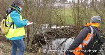 Gewässerschau in Simmerath: Wie läuft's für den Roßbach? - Aachener Nachrichten