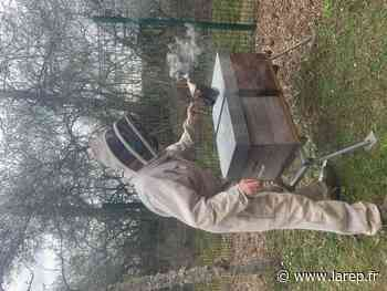 Des abeilles comme outils pédagogiques - La République du Centre