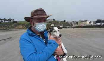 Douarnenez. Une petite chienne sauvée par les pompiers après une chute de 7 m - maville.com