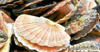 Douarnenez - À Douarnenez, pourquoi vous n'avez pas pu ramasser de coquillages pendant les grandes marées - Le Télégramme