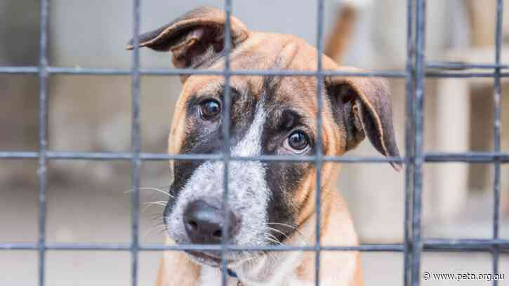 Shelters in Crisis as People Surrender 'Pandemic Puppies'