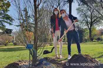 Le moteur de recherche YouCare plante son 25000e arbre à Levallois-Perret - Le Parisien