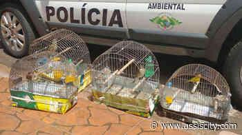 Polícia Ambiental apreende aves em Chavantes O proprietário afirma que desconhecia a necessidade de uma autorização - Assiscity