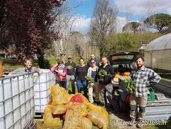 Saint-Pierre-du-Mont (40) : Une cueillette de plantes à recycler - Sud Ouest
