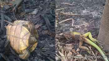 Incendio arrasó con 20 hectáreas de bosque protegido en Chimichagua, Cesar - EL HERALDO