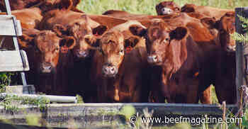 From start to finish - Genomic tools now available for feedlot cattle