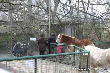 Endlich wieder Streicheleinheiten für die Tiere im Leintalzoo in Schwaigern - Heilbronner Stimme