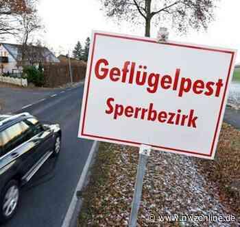 Seuchenschutz im Ammerland: Wildgänse vom Ellernteich mit Vogelgrippe infiziert - Nordwest-Zeitung