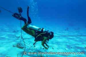 Marine Conservation Society Seychelles restoring reef at Ste Anne Marine National Park - Seychelles News Agency