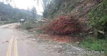 Queda de árvores interdita parcialmente ES 164 em Vargem Alta - A Gazeta ES