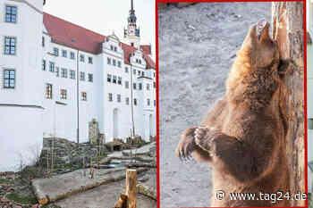 Ab ins neue Spieleparadies: In Torgau sind die Bären wieder los! - TAG24