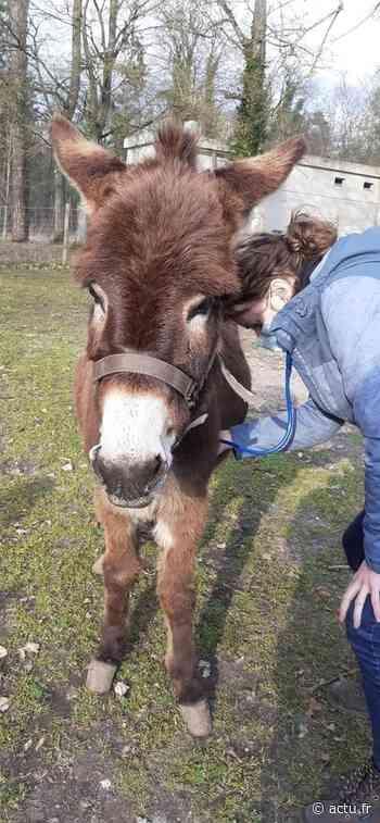 Seine-et-Marne. Sauvée par Avon'ânes, Noisette est arrivée à Avon - actu.fr