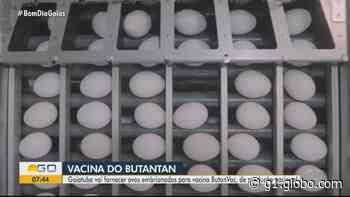 Granja em Goiatuba deverá produzir até 360 mil ovos por dia para vacina Butanvac, diz empresa - G1