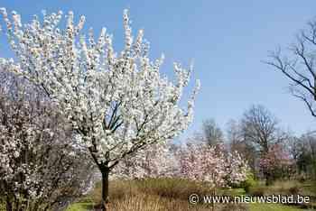 Bloemenpracht in plantentuin (Merksplas) - Het Nieuwsblad