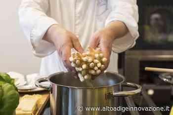 Iniziata oggi a Terlano la stagione degli asparagi - Alto Adige Innovazione