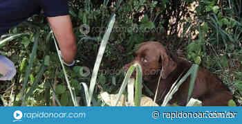Polícia Municipal resgata cachorro em vicinal de Artur Nogueira - Rápido no Ar