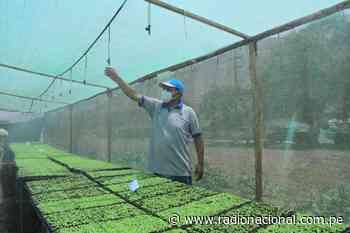 Productores de Lurigancho-Chosica ahorran 40% de agua con plantinera de hortalizas - Radio Nacional del Perú