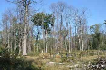 Val-d'Oise. Forêt de Montmorency. Après la pétition, une motion sur les coupes d'arbres - La Gazette du Val d'Oise - L'Echo Régional
