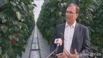 Quebec company aims to reduce dependence on imported produce with giant greenhouse project