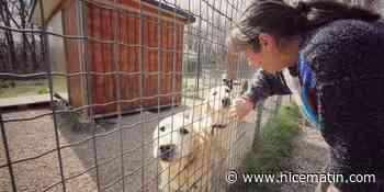 A Saint-Vallier, les vieux chiens ont vraiment besoin de vous - Nice-Matin