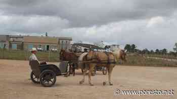Menonitas de Bacalar pagaron 10 mdp por dañar el medio ambiente - PorEsto