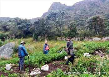 Agricultores de Villapinzón recibieron asesoría para asegurar sus cosechas - Extra Palmira