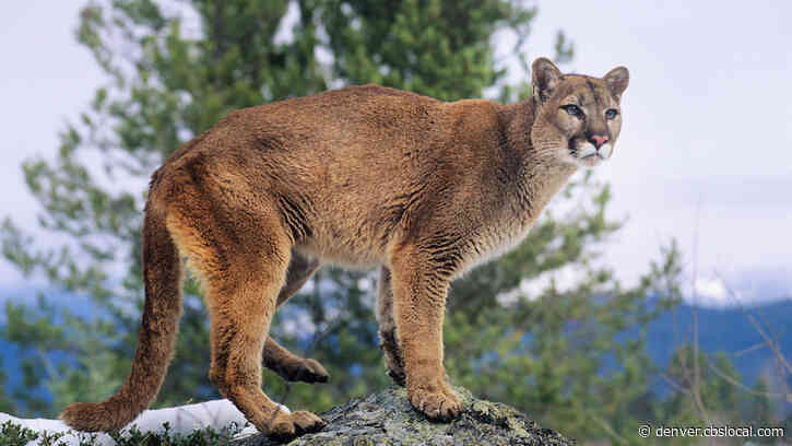 Federal Judge: U.S. Fish And Wildlife Service Illegally Paid For Colorado Predator Hunt