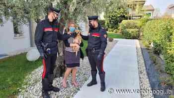 Bussolengo, cagnolino rompe la recinzione e fugge: i carabinieri lo salvano e lo riportano a casa - veronaoggi.it