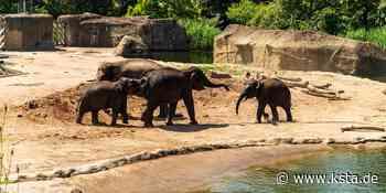 Corona in Köln: Testzentrum im Zoo öffnet wohl an Ostersamstag - Kölner Stadt-Anzeiger