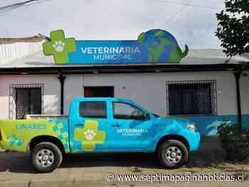 Este lunes comienza el trabajo de la Clínica Médico Veterinaria de Linares - Septima Pagina