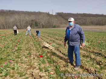 Essonne : le Rotary club d'Etampes récolte les Tulipes de l'Espoir 2021 - Le Républicain de l'Essonne