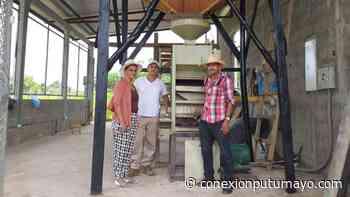 Víctimas del conflicto armado se dedicaron a producir arroz en Puerto Leguízamo, Putumayo - Conexión Putumayo