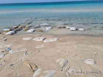Torre Lapillo, una discarica di plastica in riva al mare: la segnalazione su dilloatelerama   Telerama News - TeleRama News