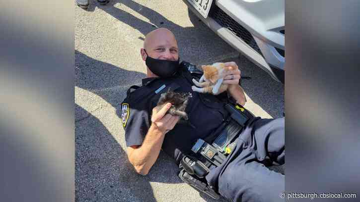 Texas Cop Rescues Kittens Trapped Under High School Cheerleader's Car