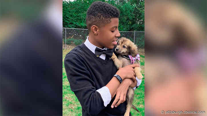 Teen Helps Adoptable Dogs Stand Out With Handmade Bow Ties