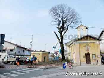 Torre San Giorgio: Abbattuto il grande tiglio - L'albero era pericoloso - Il Corriere di Saluzzo
