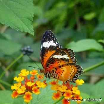 Un jardin habité de papillons merveilleux Tropique du papillon samedi 5 juin 2021 - Unidivers