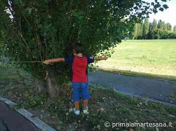 Nuovi alberi piantati per ogni prima media di Gessate - Prima la Martesana