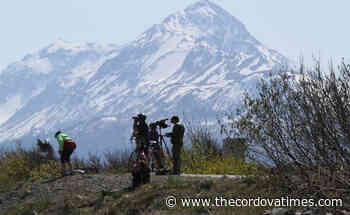 Kachemak Bay shorebird festival will be live and virtual - The cordova Times