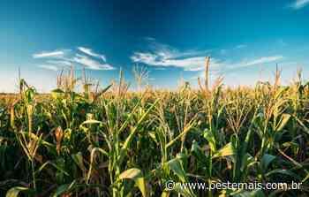 Com prejuízo de R$ 8 milhões na agricultura, Ipira discute situação de emergência - Oeste Mais