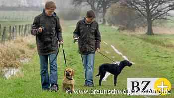 Hundebesitzer in Salzgitter aufgepasst: Hier gilt Leinenpflicht