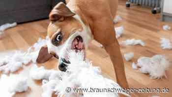 Finanzen: Haustier-Boom durch Corona: Wie Sie Hunde richtig versichern
