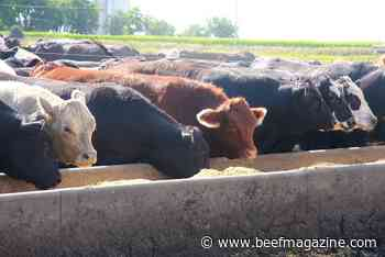 Rising feed prices impact cattle markets
