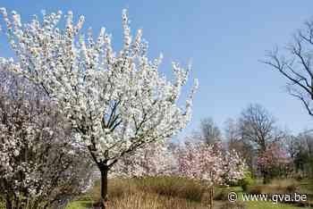 Bloemenpracht in plantentuin (Merksplas) - Gazet van Antwerpen Mobile - Gazet van Antwerpen