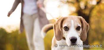 30 MARZO 2021   VITORCHIANO - Proseguono le iniziative a favore degli animali - - Eventi della Tuscia