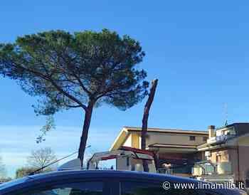 Monte Compatri | Verde pubblico: potatura straordinaria in viale Busnago - ilmamilio.it - L'informazione dei Castelli romani