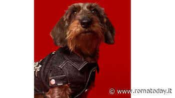 La doggies collection di Diesel dedicata ai cani di piccola taglia
