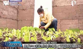 Cerro de Pasco: agricultores cultivan hortalizas gracias a fitotoldos   Panamericana TV - Panamericana Televisión