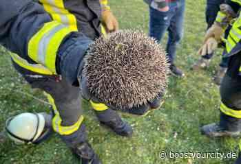 Tierrettung in Bodenheim durch die Freiwillige Feuerwehr   BYC-News Rheinhessen Online-Zeitung - Boost your City   Rhein-Main Nachrichten