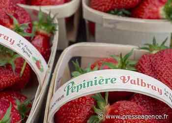 HYERES : Pépinières VALBRAY, un délicieux goût de fraise - La lettre économique et politique de PACA - Presse Agence